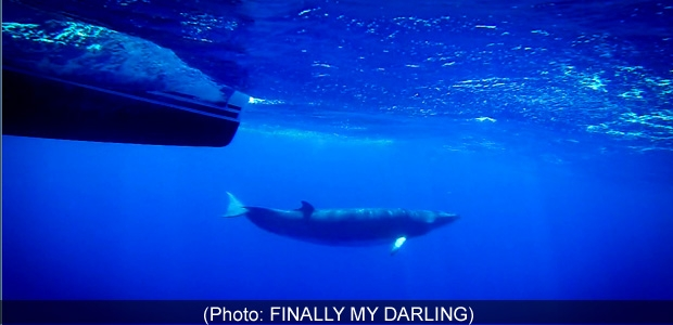whale-fmdarling