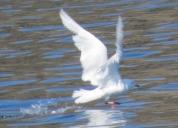 Aasiat birds (1)