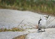 Aasiat birds (2)