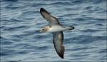 ocean-seabirds-1