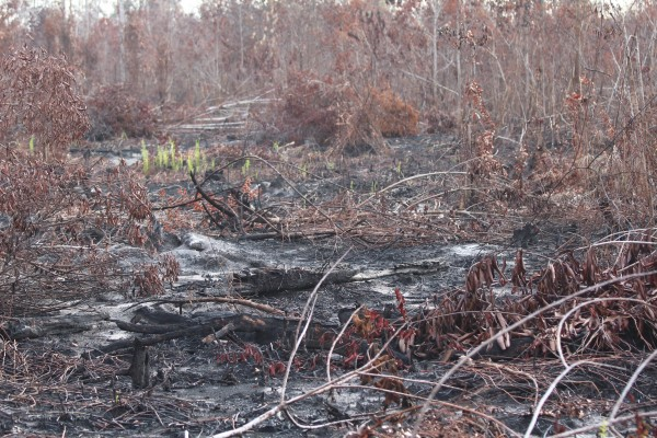 Remains of the forest fire