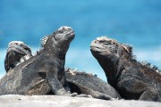 PO2016-Galapagos-thb